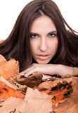 Beauty in nature - autumn Royalty Free Stock Image
