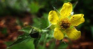 Beauty In nature. Flower, yellowflower, details, macro, macrophoto, closeup, closeupphotography, flowerphoto, beautifulnature, beautyinnature, naturelovers royalty free stock photo
