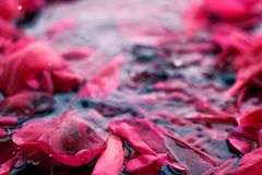 Romantic abstract floral background, pink flower petals in water. Beauty of nature, dream garden and wedding backdrop concept - Romantic abstract floral royalty free stock images
