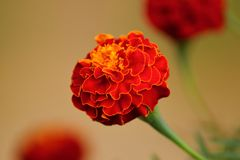 Beauty In Nature The Flower Wallpaper stock photos