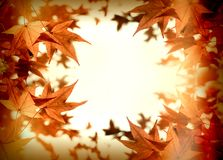 Beauty in nature, leaves, lush foliage in autumn. Autumn foliage - autumn leaves lit by sun rays sunbeams, beautiful nature in autumn Royalty Free Stock Photo