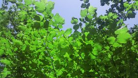Tree leaves. The beauty in nature. stock image
