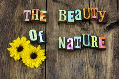 Beauty nature miracle flower natural purity life. Barnwood environment love beautiful miracles kindness sunshine positive attitude live faith hope letterpress stock photography