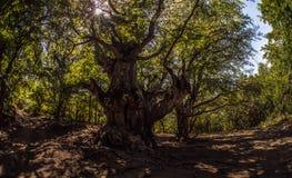 Beauty nature landscape Crimea Stock Photography