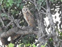 Beauty of nature. Owl stock photo
