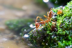Ant macro   Beauty in Nature stock image