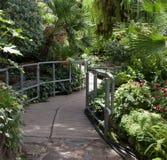 Beauty in nature. Plants in a greenhouse, Allan Gardens, Toronto, Ontario, Canada Royalty Free Stock Photos