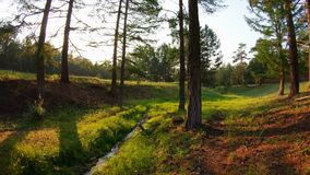 Beauty of nature. The stream and green grass in the forest at sunset. POV. Beauty of nature. Stream and green grass in the forest at sunset. Bright sun shines stock video footage