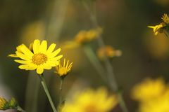 Beauty of nature in summer royalty free stock photos