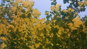 Leaves on the tree.The beauty in nature. royalty free stock photo