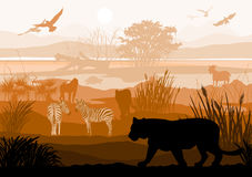 Beauty of nature with wild animals (Tiger, Zebra, goat, bird, mo Stock Image