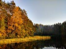 Northern Autumn royalty free stock photo