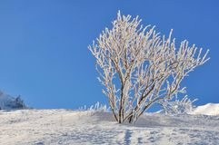 Beauty of nature in winter Stock Photos