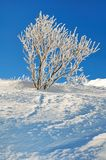 Beauty of nature in winter Royalty Free Stock Photos