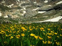Beauty in nature. Yellow flowers and snowy mountain landscape from black lake. Bolkar Mountain and Taurus Mountain in Turkey