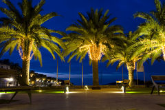 Beauty of night park. Palm-trees decorated with garlands Royalty Free Stock Image