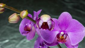 Beauty orchid stock video footage