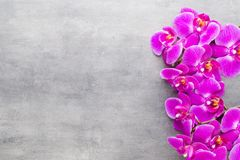 Beauty orchid on a gray background. Spa scene. Orchid and spa stones on a stone background. Spa and wellnes scene Royalty Free Stock Image