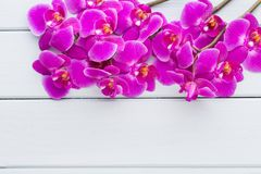 Beauty orchid on a gray background. Spa scene. Orchid and spa stones on a stone background. Spa and wellnes scene Royalty Free Stock Images