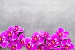 Beauty orchid on a gray background. Spa scene. Orchid and spa stones on a stone background. Spa and wellnes scene Stock Photos
