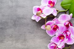 Beauty orchid on a gray background. Spa scene. Orchid and spa stones on a stone background. Spa and wellness scene Royalty Free Stock Photos