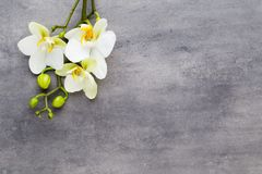 Beauty orchid on a gray background. Spa scene. Orchid and spa stones on a stone background. Spa and wellness scene Stock Photo