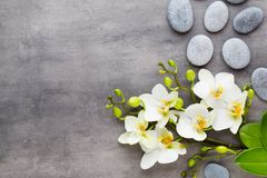 Beauty orchid on a gray background. Spa scene. Orchid and spa stones on a stone background. Spa and wellness scene Stock Photography