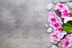 Beauty orchid on a gray background. Spa scene. Orchid and spa stones on a stone background. Spa and wellness scene Royalty Free Stock Image