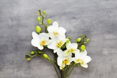 Beauty orchid on a gray background. Spa scene. Orchid and spa stones on a stone background. Spa and wellness scene Royalty Free Stock Photography