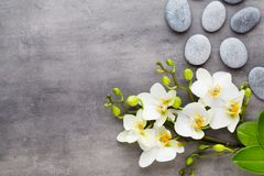 Beauty orchid on a gray background. Spa scene. Orchid and spa stones on a stone background. Spa and wellness scene Royalty Free Stock Photo