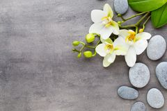 Beauty orchid on a gray background. Spa scene. Orchid and spa stones on a stone background. Spa and wellness scene Stock Photos