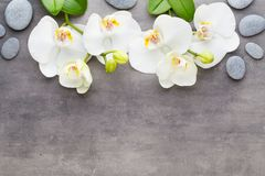 Beauty orchid on a gray background. Spa scene. Royalty Free Stock Photo