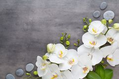 Beauty orchid on a gray background. Spa scene. Orchid and spa stones on a stone background. Spa and wellnes scene Stock Image