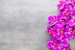 Beauty orchid on a gray background. Spa scene. Orchid and spa stones on a stone background. Spa and wellnes scene Stock Photography