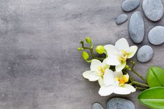 Beauty orchid on a gray background. Spa scene. Orchid and spa stones on a stone background. Spa and wellness scene Stock Images