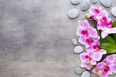 Beauty orchid on a gray background. Spa scene. Stock Photo