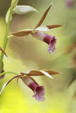 The beauty of orchids Stock Photos