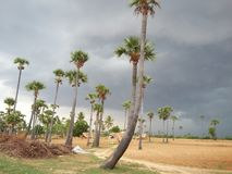The Grey sky. The beauty of palm trees was increased by the grey appearance of the sky royalty free stock photo