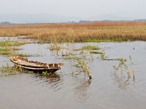 Beauty panorama wrench old boat wild papyrus swamp Stock Image