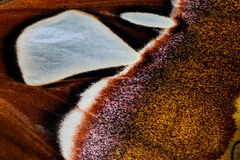 Beauty patterns of butterfly wings, Macro style Stock Photography