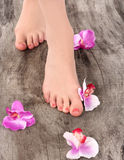 Beauty pedicured feet Royalty Free Stock Photos