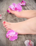 Beauty pedicured feet Stock Image