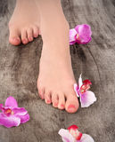 Beauty pedicured feet Stock Photography