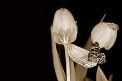 Beauty On Petals Royalty Free Stock Photo