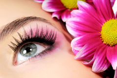 Beauty pink make-up. Close-up of woman green eye. Pink flower on background Royalty Free Stock Photography