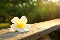 beauty Plumeria flower on wooden railing Royalty Free Stock Images
