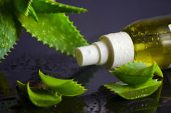 Beauty products for spa with aloe vera Royalty Free Stock Images