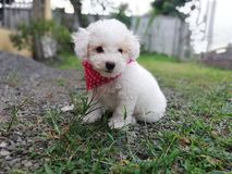 Beauty puppy stock photo