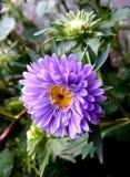 Purple royalty free stock photos
