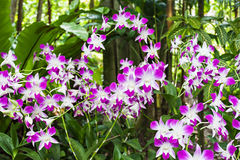 Beauty purple orchids Stock Photography